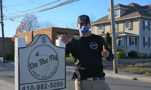 Looking for the Best Pest Exterminator in Owings Mills, MD?